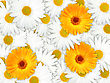 Abstract Background Of Orange And White Flowers For Your Design. Close-up. Studio Photography.
