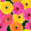 Abstract Background Of Pink, Yellow And Orange Flowers. Seamless Pattern. Close-up. Studio Photography