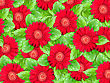 Abstract Background Of Red Flowers And Green Leaf For Your Design. Close-up. Studio Photography. stock photography