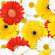 Abstract Background Of Red, Yellow And White Flowers. Seamless Pattern For Your Design. Close-up. Studio Photography.