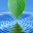 Abstract Background Of A Reflect Green Leaf In Blue Water. Close-up stock image