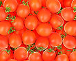 Abstract Background Of Ripe Red Tomatos. Close-up. Studio Photography stock photography