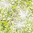 Abstract Background Of White Lilac With Green Leafs. Seamless Pattern For Your Design. Close-up. Studio Photography.