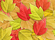 Abstract Colorful Nature Background With Group Of Autumn Leafs.Close-up. Studio Photography