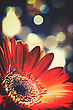 Beam Abstract Floral Backgrounds With Beaty Bokeh stock photography