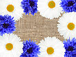 Abstract Frame With White And Blue Flowers On Textile Background. Close-up. Studio Photography stock photo