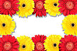 Abstract Frame With Yellow And Red Flowers. Close-up. Studio Photography