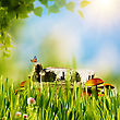 Abstract Natural Backgrounds With Green Grass, Mushrooms, Etc Under Bright Sun stock photo