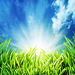 Abstract Natural Backgrounds With Green Grass Under The Blue Skies