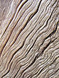 Abstract Old Wood Texture stock image