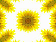 Abstract Pattern Of Sunflower On White stock photography