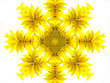 Abstract Pattern Of Sunflower On White stock photo
