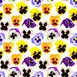 Abstract Seamless Pattern With Motley Flowers Of Pansyes . Isolated On White Background. Close-up. Studio Photography stock photography