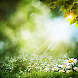 Abstract Summer Backgrounds With Daisy Flowers stock image