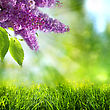 Abstract Summer And Spring Backgrounds With Lilac Tree stock image