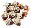 October Acorns stock photo