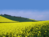 Agriculture - Yellow Fields stock image