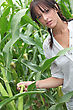 Ripen Agriculturist Stood In Corn Field stock photography