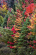 Algonquin Park Muskoka Ontario Fall Autumn Colors stock photography