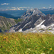 Alpine Alps Flowers Field On Mountains Background. Bavarian Alps stock photography