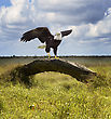 American Bald Eagle Perching On A Tree stock photo