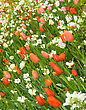 Angle Shot Of Flowerbed In Keukenhof Park In Holland stock photo