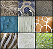 Animal Pattern Texture Of Skin, Fur And Feathers stock photo