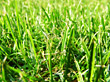 lawn nature grass plants landscaping stock photography