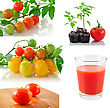 Assortment Of Tomato Vegetables And Tomato Juice stock image