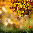 Autumn, Abstract Natural Backgrounds For Your Design
