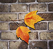 Autumn Background With A Brick Wall And Leaves stock image