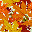 Autumn Background, Seamless Tile With Maple Leaves. Abstract Background, Easy To Edit, Copy Paste stock illustration