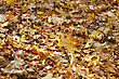 Autumn Bright Dry Leaves Background stock photo