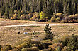 Autumn Colors Cypress Hills Canada Interprovincial Park Horses stock image