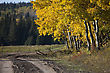 Autumn Colors Cypress Hills Canada Interprovincial Park stock photography