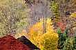 Autumn Colors And Wood Chip Pile In Algonquin Park Ontario Canada stock photo