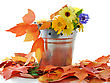 Autumn Flowers And Colorful Leaves In A Decorative Bucket stock image