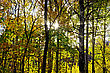 Autumn Forest With Yellow Leaves Of The Trees, The Sun Shines Through The Branches, Sky