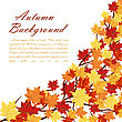 Autumn Frame With Maple Leaves On Branches Of Tree Over White Background. Elegant Design With Text Space And Ideal Balanced Colors. Vector Illustration