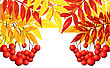 Autumn Frame With Rowan Leaves And Berries Over White Background. Elegant Design With Text Space And Ideal Balanced Colors. Vector Illustration