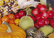 Autumn Harvest stock photo