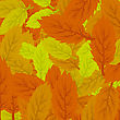 Autumn Leaves Background. Set Of Yellow And Orange Leaves stock illustration