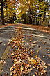 Autumn Leaves On Road Northern Michigan stock photography