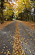 Autumn Leaves On Road Northern Michigan stock image