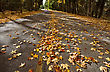Autumn Leaves On Road Northern Michigan stock photo