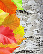 Autumn Leaves Over Wooden Background stock image