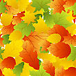 Autumn Maples Leaves Seamless Background. Vector Illustration.