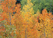 Autumn Trees Background stock image