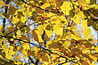 Autumn Yellow Leaves. Background stock photo