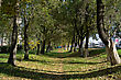 Avenue Of Trees In The City Along The Road stock photography